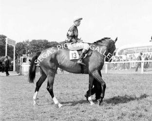Brilliant Green with Lester Piggott (b131-03)